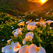 Calla Lily Valley, Big Sur - More vivid version by Yan L Photography