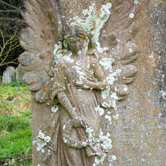 lichen angel