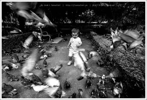 Espantando palomas by Sansa - Factor Humano