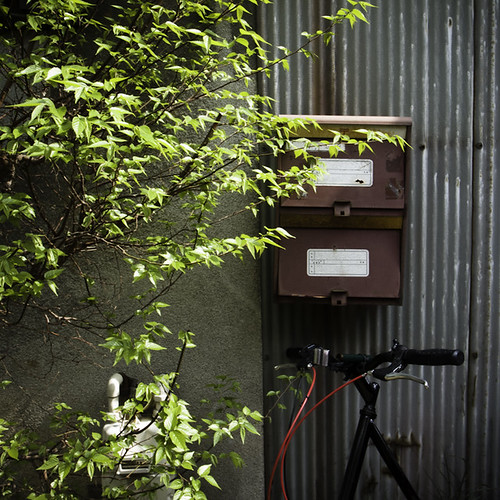 Double Mailbox with Shrubbery and Bicycle