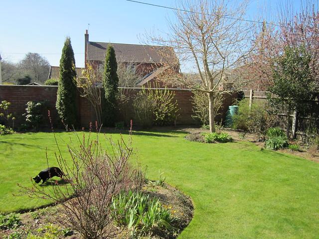 Spring garden (6)