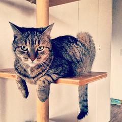 seems to be comfy #cat #schweiz