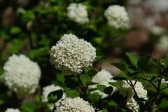 State Arboretum of Virginia in April- 7
