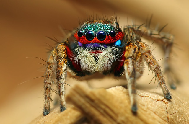 8680588927 17bd4a5e89 z 25 Insanely Detailed Macro Images Of Insects