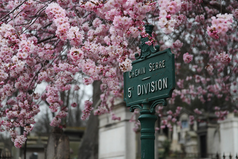 Pere Lachaise Cemetery Cherry Blossoms
