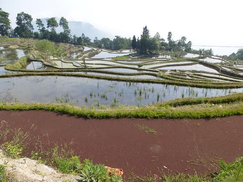 Yunnan13-Yuanyang 6 (2)