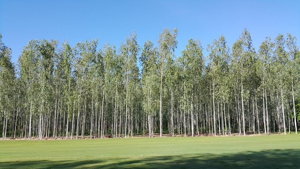 ナライヒルでプチ合宿 木が白かった。