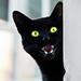 angry cat by diego.armando.parafango