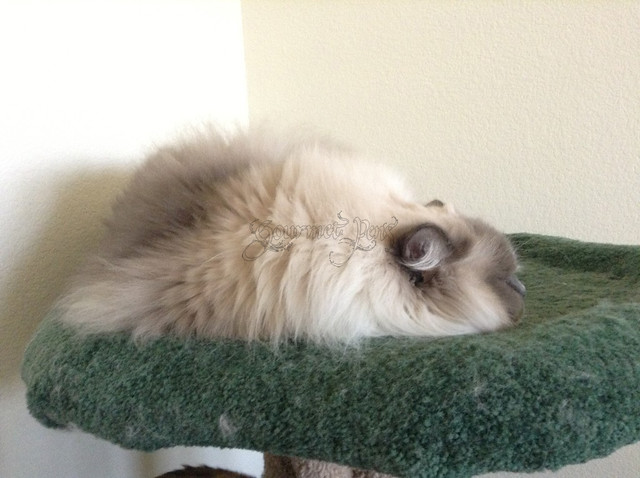 Tyco On Cat Tree