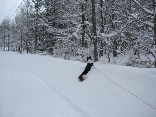 ランディと雪の壁 by Poran111