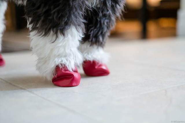red pawz dog boots