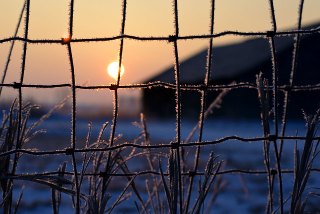 Frosty Sutliff Fence