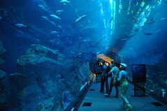 Inside Dubai's aquarium.