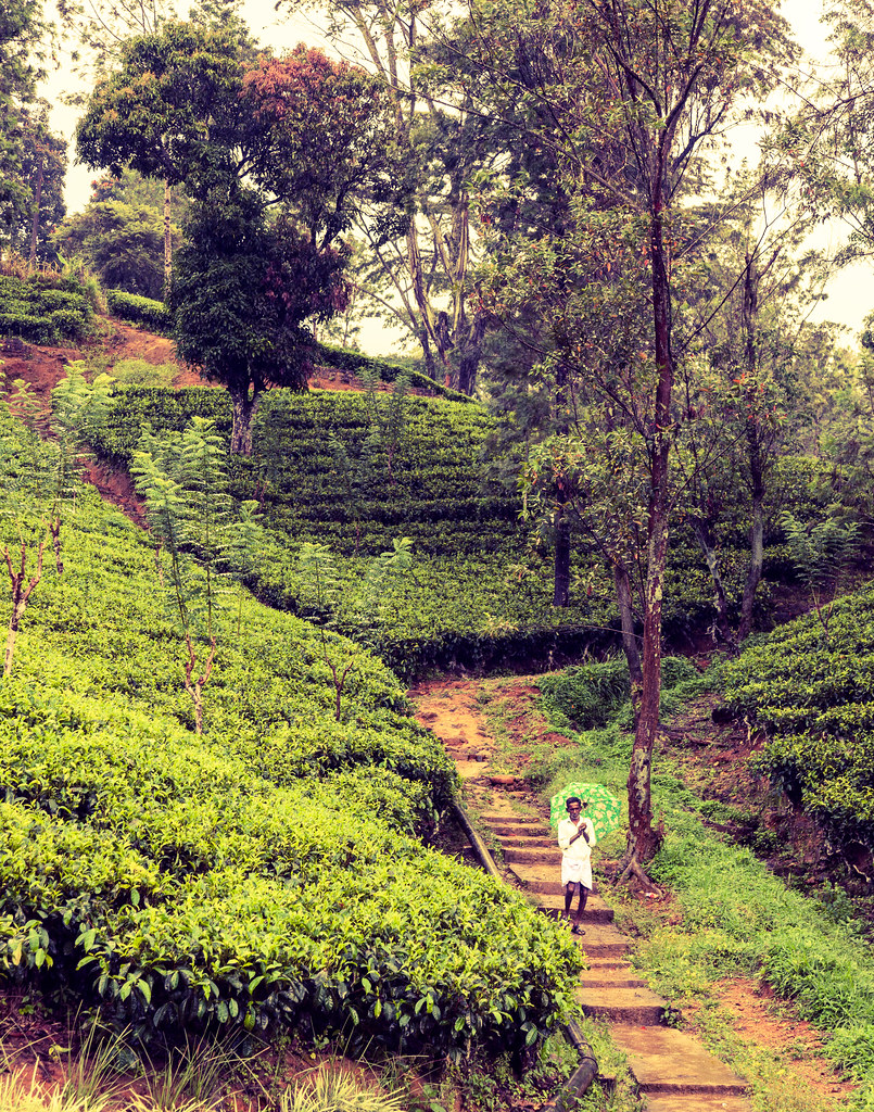 Sri Lanka - Tea Country
