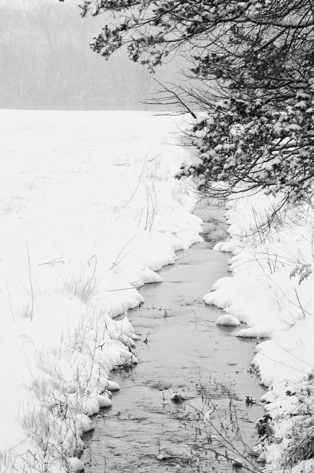 winter creek bw
