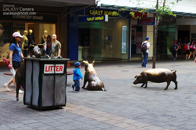 bronze pigs adelaide