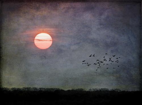 blue trees sky texture nature clouds sunrise canon landscape dorset fleet weymouth 100400 50d