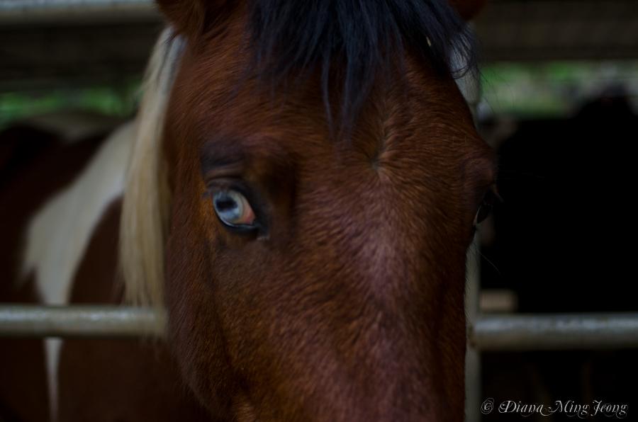 Cherokee Ranch