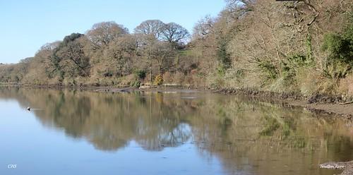 Tresillian River by Stocker Images