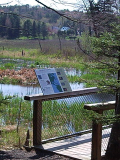 Penny lake bird display