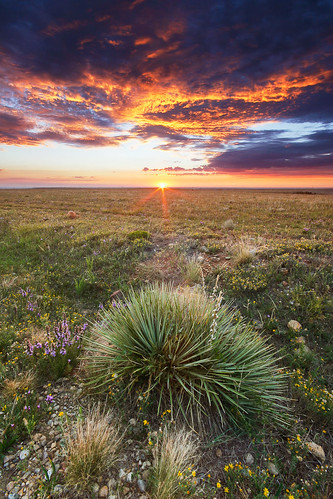 morning favorite green clouds sunrise flora colorado purple unitedstates boulder sunburst prairie yucca grasslands