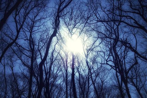 [フリー画像素材] 自然風景, 森林, レンズフレア, 青色・ブルー ID:201303211200