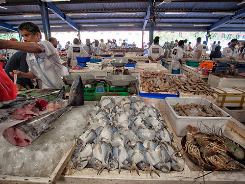 Dubai Fish Market #06