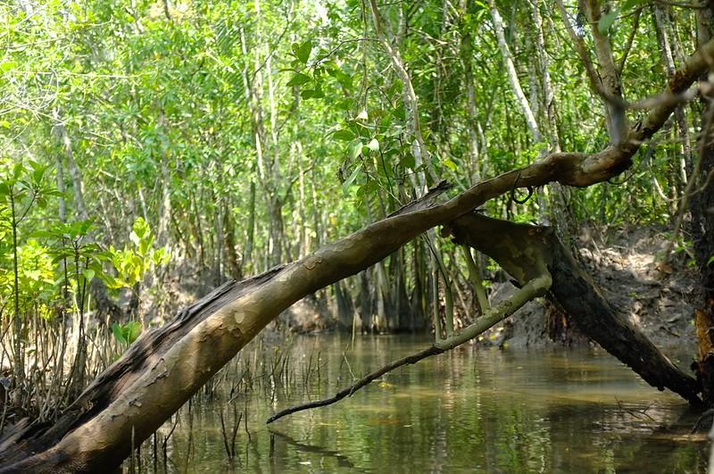 Mangrove 17