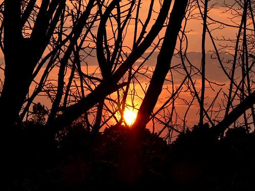 trees sky sun alberi sunrise landscape alba cielo sole paesaggio