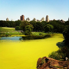 Green Turtle Pond in Central Park...