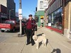 Pendleton-Gazette.com posted a photo:	Doug Owens and friend on their way to their office here in Pendleton, Indiana.