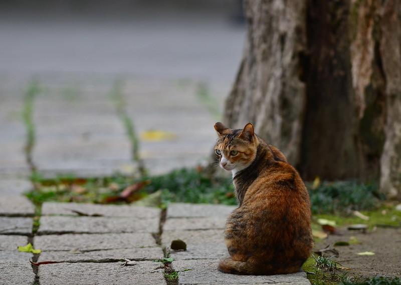 貓。。風景
