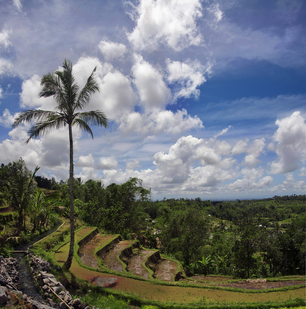 Rice Terrace Bali Risaie A Terrazza A Jatilawih View On
