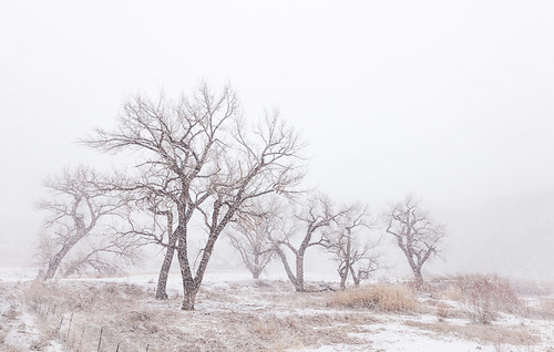 trees winter usa white snow storm tree fog colorado unitedstates group canyon valley cottonwood gateway snowfall blizzard cottonwoods doloresriver