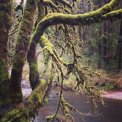 Furry trees I like to pet #oregon