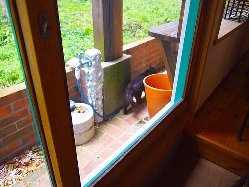 カフェで猫ちゃんに会えた