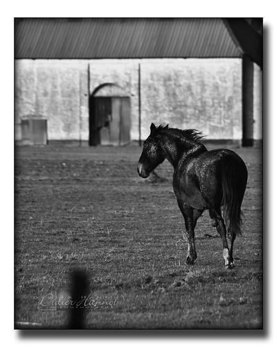 [Review] Bob, mon étalon noir   Bob, my black stallion - #DH274
