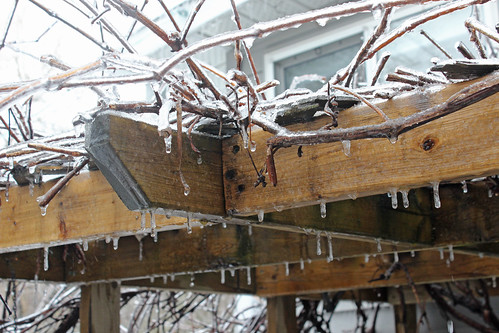 Ice Storm: Arbour Drips