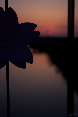 bridge sunset japan river evening nikon niigata 夕日 d90 2013 加治川 さくら大橋 photomovin