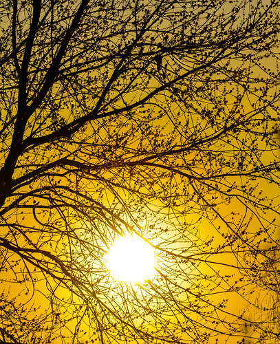 trees winter sunset orange sun tree yellow set last evening backyard neighborhood behind mygearandme