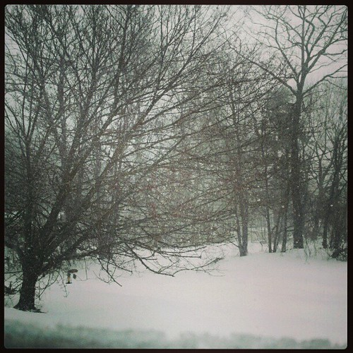 Got Snow? View from our window.. #driveway #snow #tree #Blizzard2013 #Nemo #newengland