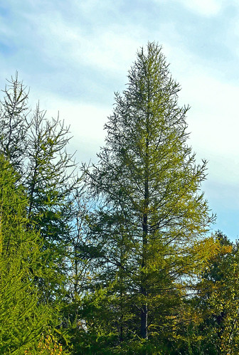 county blue trees sky tree nature clouds forest leland woods natural outdoor path michigan scenic panasonic trail deciduous larch tamarack naturalarea leelenau m22 outdoorbeauty scenicmichigan fz18 scenicsnotjustlandscapes jimflix houdekdunes leelenauconservancy