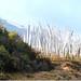 RM 13... Bhutan Nepal Assam Shillong