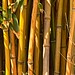 Bamboo by Kool Cats Photography over 8 Million Views