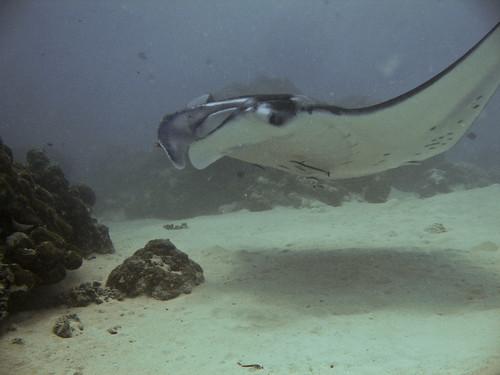 BLS - Dive Blog II - Close Encounters  (03)