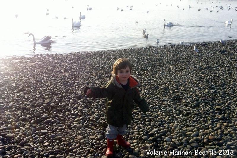 Beach pebbles swans