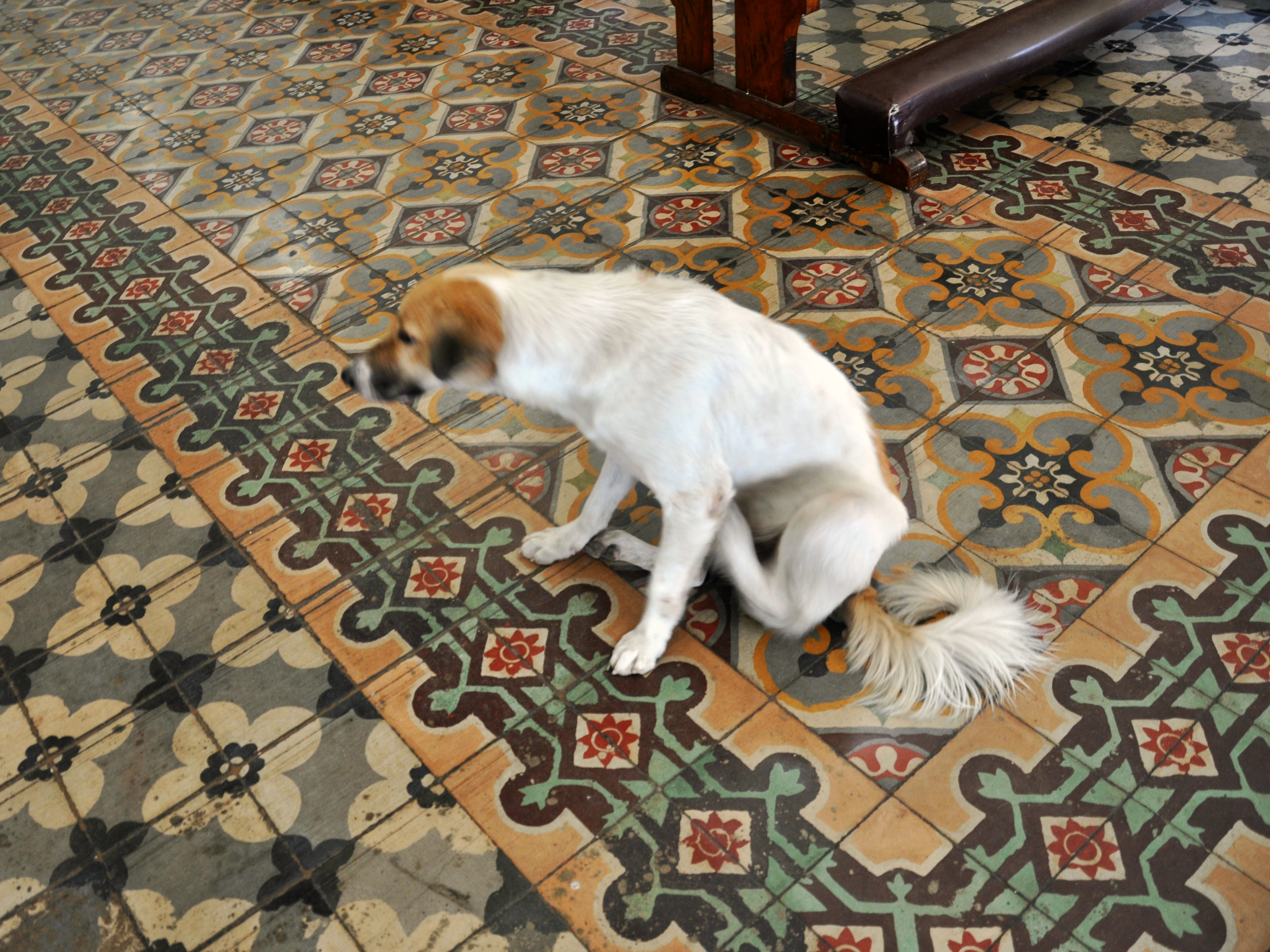 Machuca Tiles and a Dog