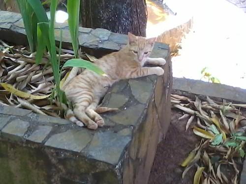 Una ronda de gatos por favor!! (1)