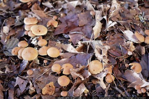 spring mushrooms    MG 2528