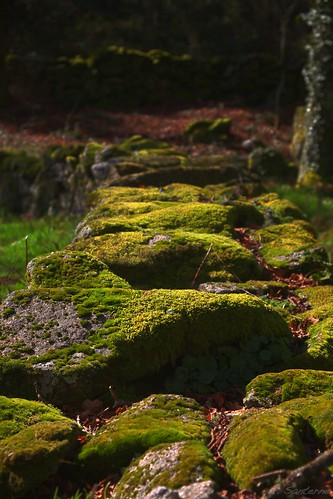 Green rocky wall